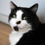 Elmo a feline patient featured on The Supervet Series 15 episode 1
